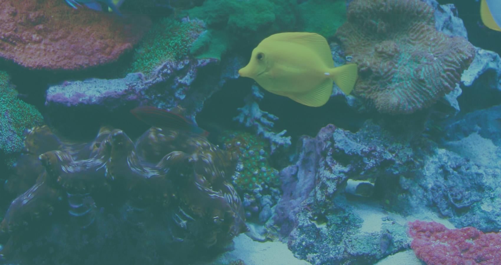 let s talk paralax reef aquaria designreef aquaria design every