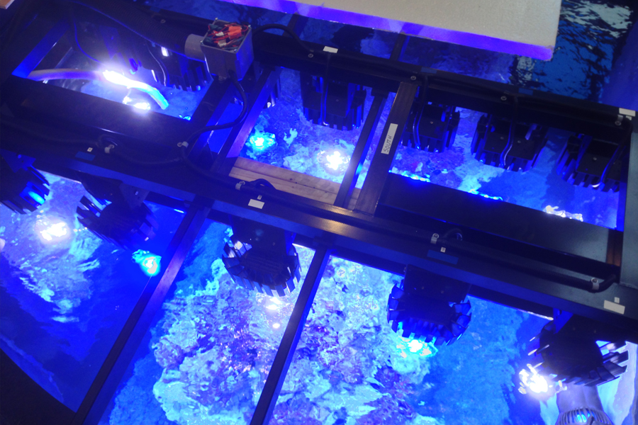 our services reef aquaria design every great room deserves a great aquarium