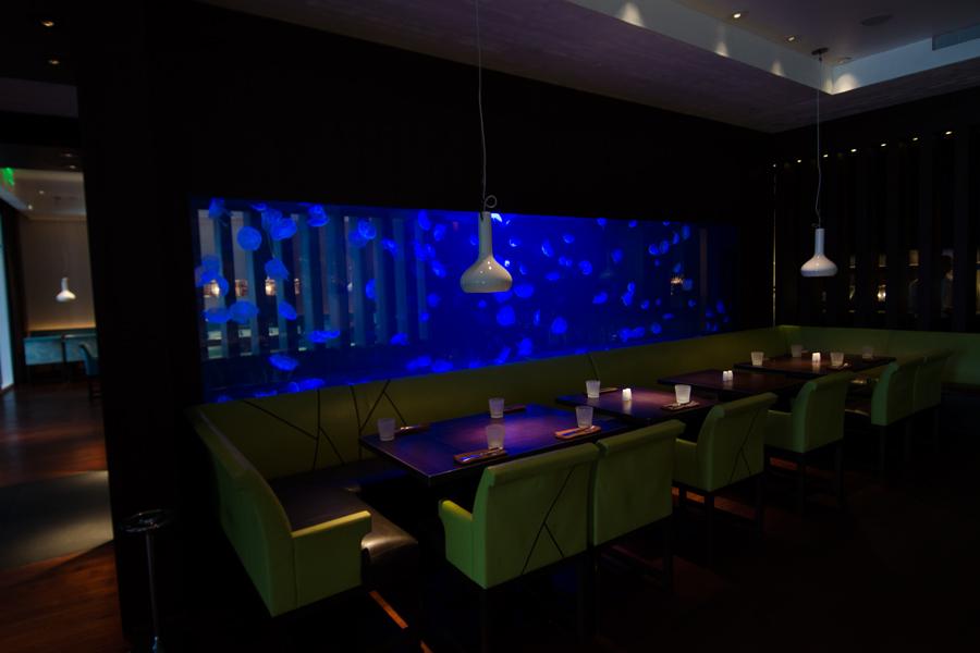 Jellyfish archives reef aquaria designreef aquaria for Jelly fish aquarium