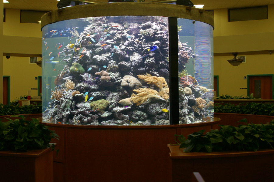 3000 Gallon Cylindrical Living Coral Reef Reef Aquaria
