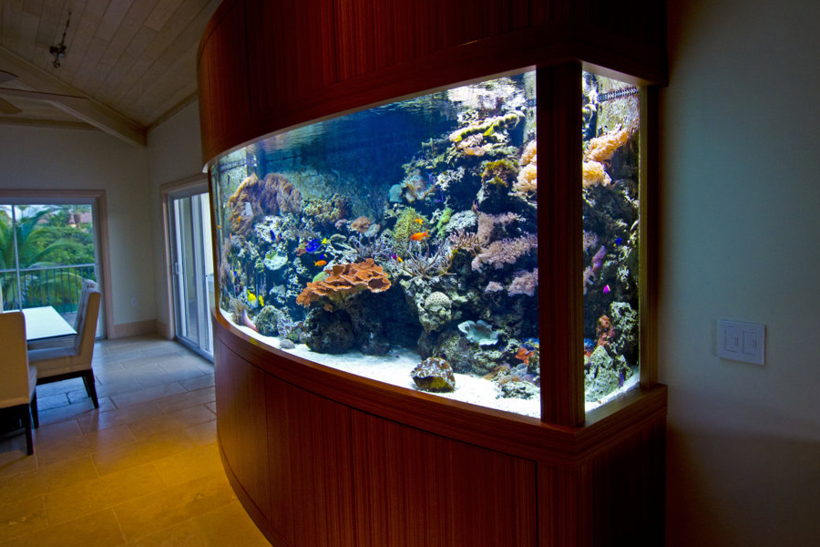 800 gallon aquarium 1000 aquarium ideas