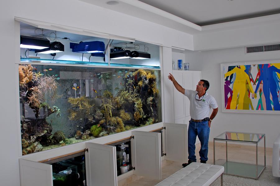 840 Gallon Living Coral Reef Reef Aquaria Designreef