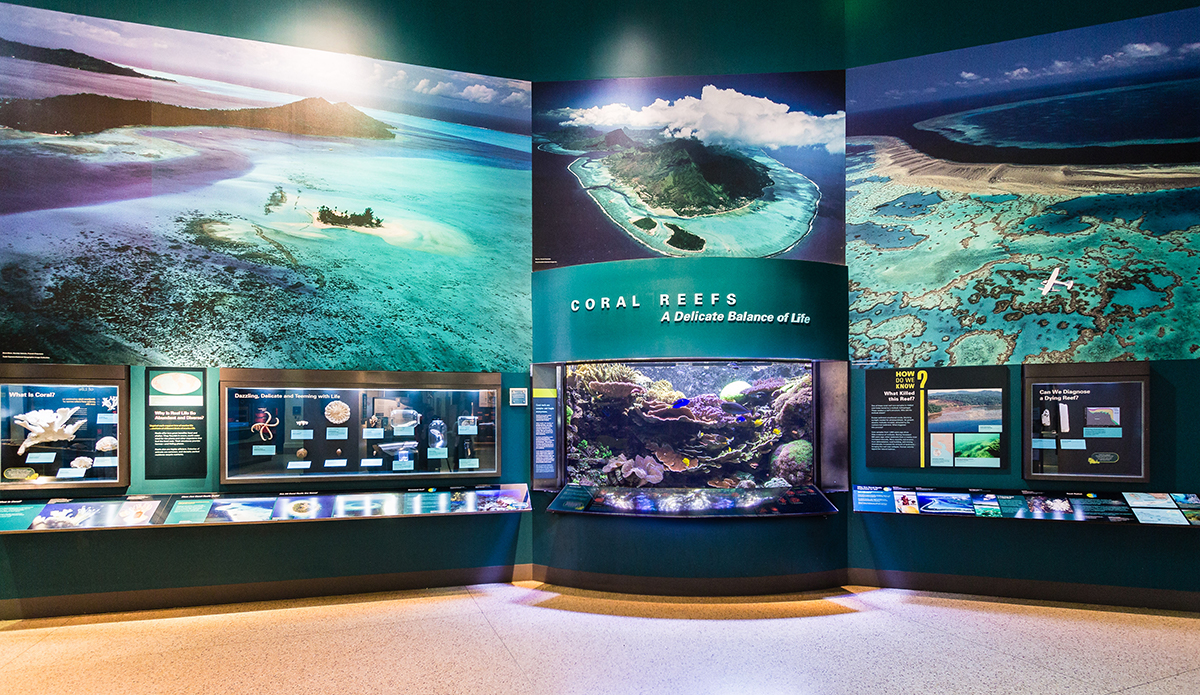 Smithsonian's 1200 Gallon Indo-Pacific Living Coral Reef