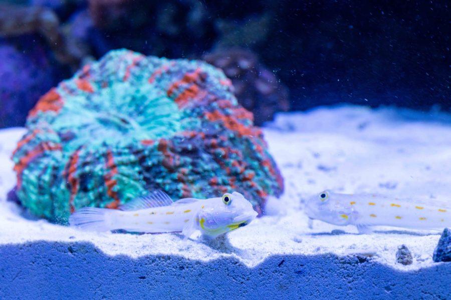 480 Gallon Bowfront Coral Reef Aquarium