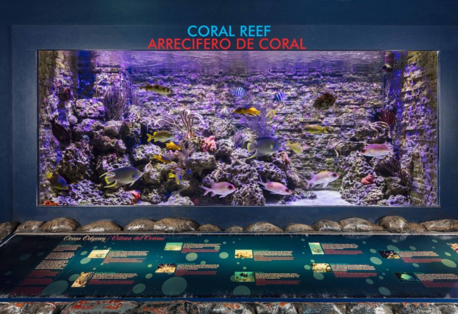 Miami Children's Museum Coral Reef